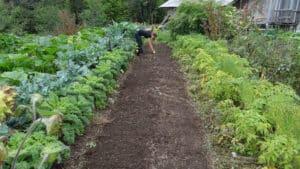 Astuces pour fertiliser le sol de son potager