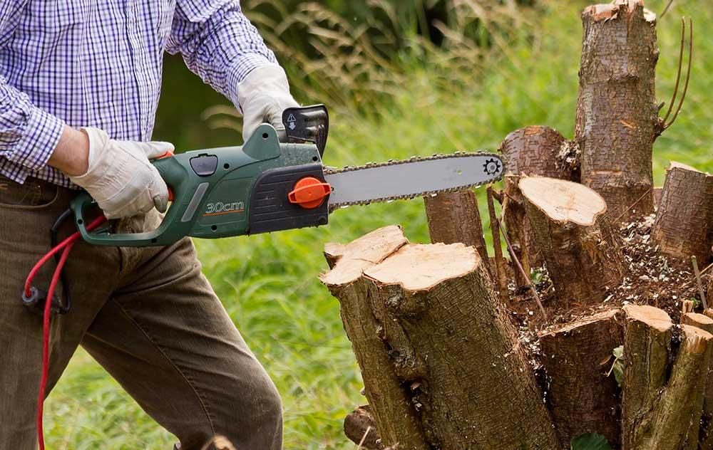 Comment détruire une souche d'arbre rapidement ?